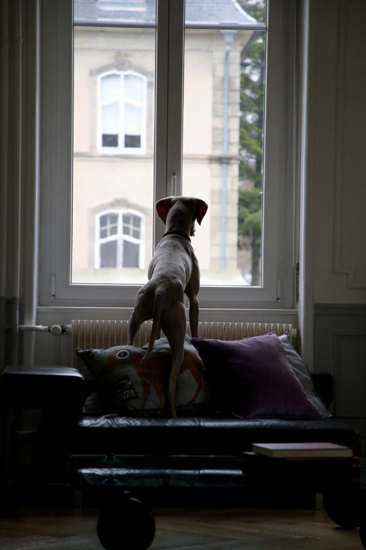Landlords, Smart Finch Properties